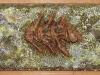 Fossil_Fish_6M